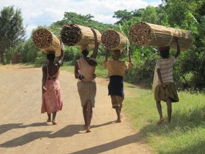Women carrying cutted cyperus.