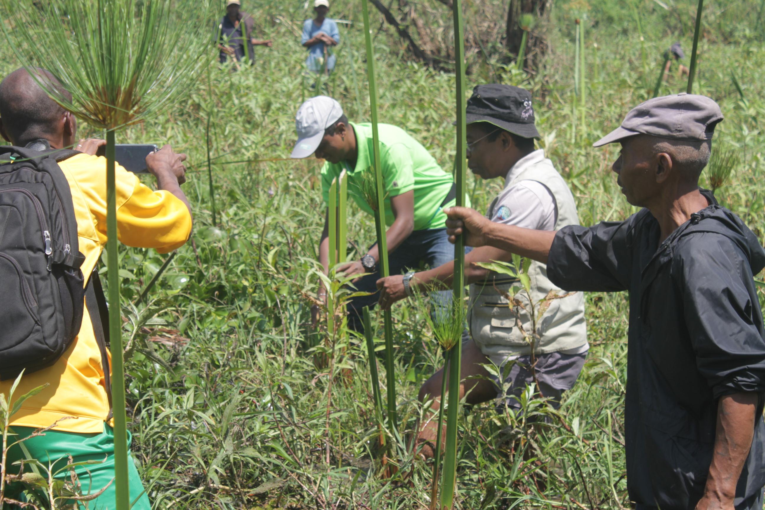 Restauration des marais autorités
